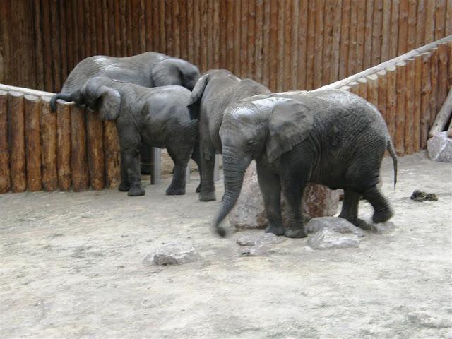 Więcej słonia!