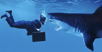 акулы эффективные охотники