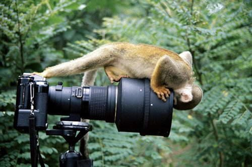 Interesting Moments - You'll Love these Photos