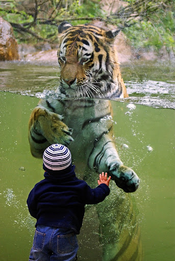 child and tiger