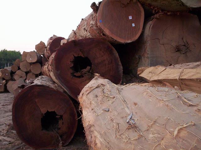 Viver em Rondônia 1 - madeira (2/3)