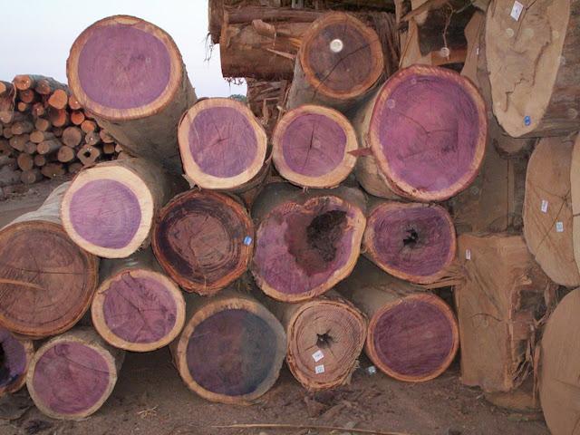 Viver em Rondônia 1 - madeira (3/3)