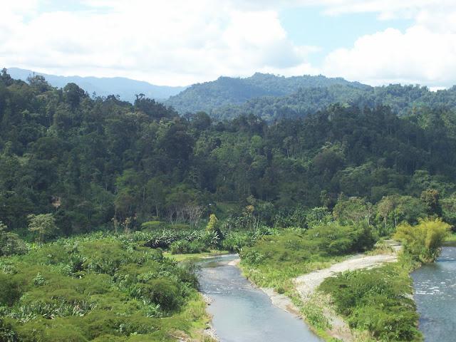 El mosaico de bosques en diferentes estadios sucesionales le da mayor riqueza y sostenibilidad a los territorios con áreas boscosas. Foto: M. Atencio.