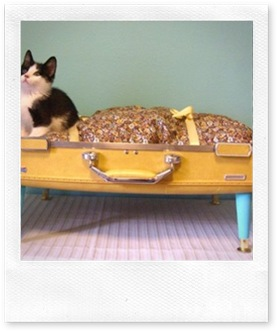 BLOG cat bed from poppytalk