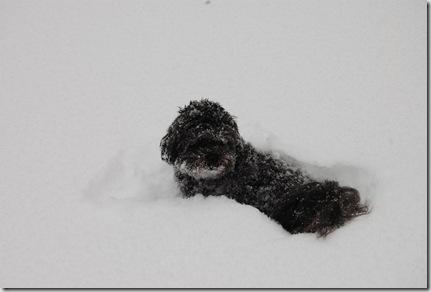 Snow 053