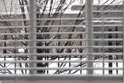 Snow 162