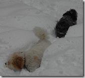 Snow 189