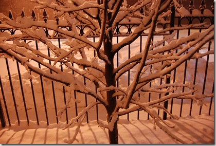 Snow 173