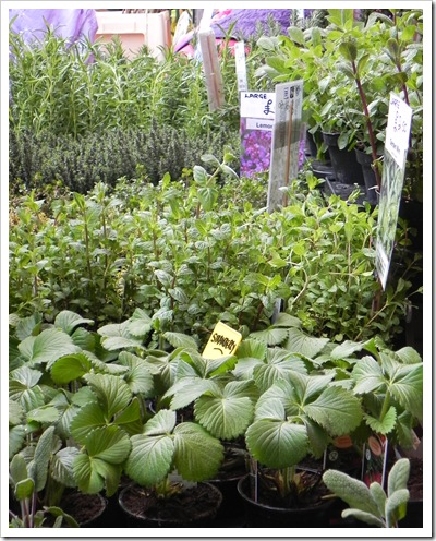 Columbia Road - Grover's herbs