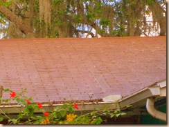 Tampa Roof Cleaning 013