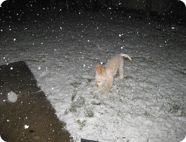 Snow Day 007