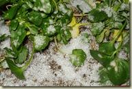 Gabian snow 7-1-09_1_1