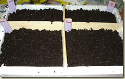 seed tray 2_1_1