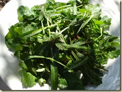march salad_1_1
