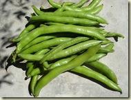 broad beans_1_1