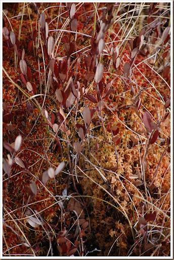 red moss