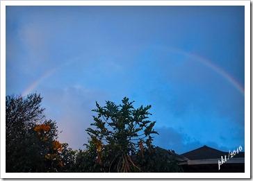 72-res-V0000335-rainbow-over-Burgoyne's-papaya-tree