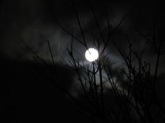 serious moonlight 003