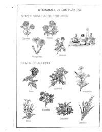 Utilidad De Las Plantas Para Colorear Utilidad De Las