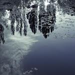 blue pond arboretum (1 of 1).jpg