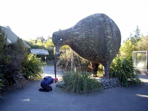 This poor girl was being eaten by the crazy large kiwi, photocredit: melissa on picasa