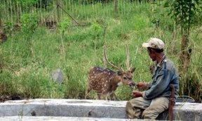 Berakrab dengan rusa
