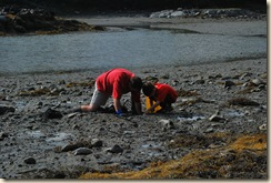 finding clams