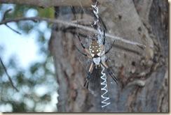 big spider closeup