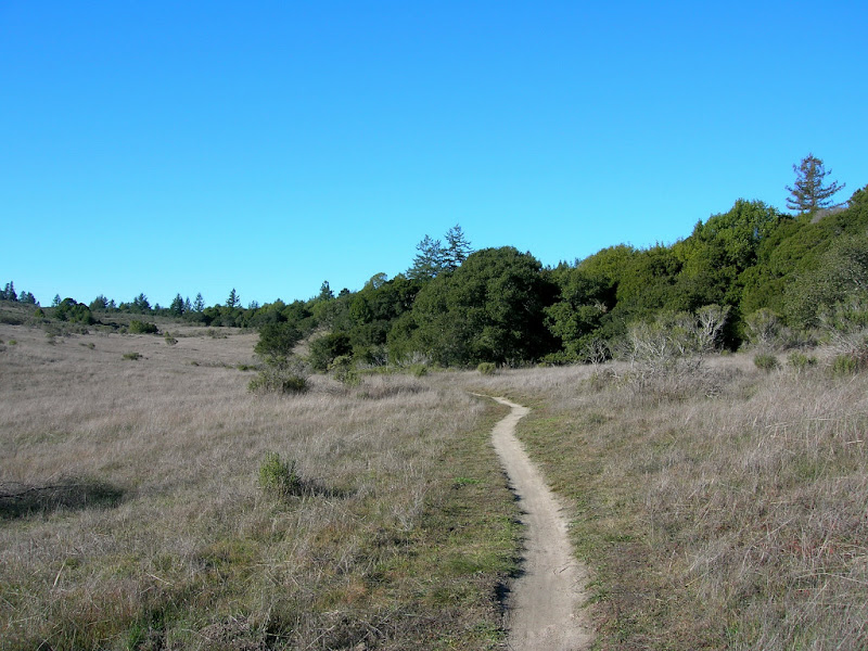 Typical scene at Wilder Ranch on the Twin Oaks Trail