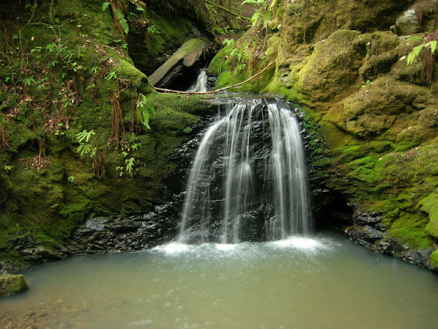 A delicate falls in a lush setting