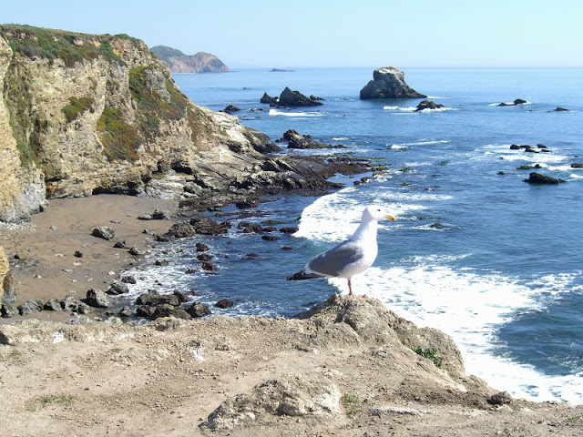 Seagull examines his domain