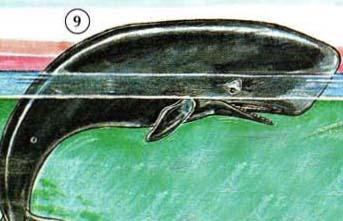 9 ။ ဝေလငါး