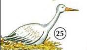 25. stork