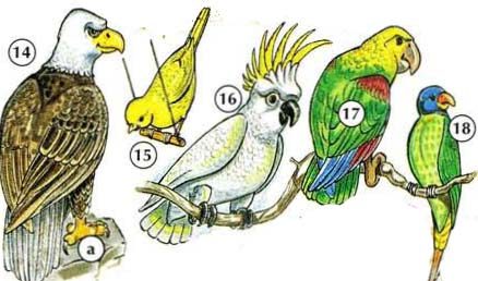 14. eagle a. claw 15. kanary 16. cockatoo 17. parrot 18. parakeet