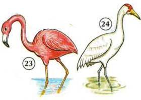 23. Flamingo 24. grúa