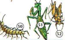 50. mille-pattes 51. mante religieuse 52. Cricket