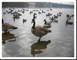 32° giorno - deer lake park (123)