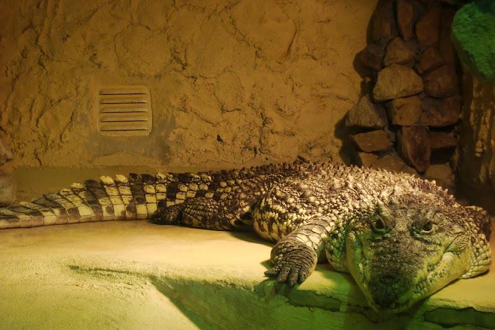 Jeden z największych bohaterów naszej pierwszej wycieczki do oliwskiego zoo.