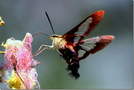 photoshare Bee,Butterfly or Hummingbird Defunick Spgs Fl PrDspgs