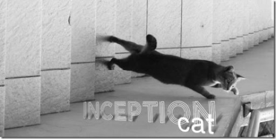 Inception Cat