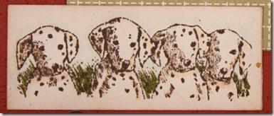 dalmatian thanks closeup
