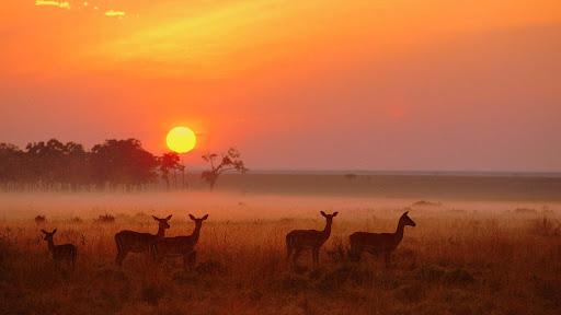 https://i0.wp.com/lh3.ggpht.com/_z3vj-KK8S8s/R1zEM5qje6I/AAAAAAAADoA/K0Yt-hMn-Yo/Impala+Herd+at+Dawn,+Masai+Mara+National+Reserve,+Kenya.jpg