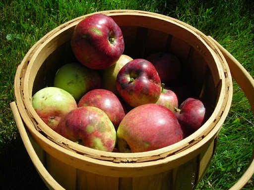 ugly apples are healthy and happy apples