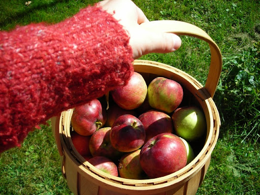 apples from my tree for pie