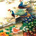/APK_ColorFul-Peacock-LiveWallpaper_PC,26680657.html