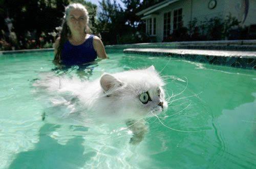 swimmmm