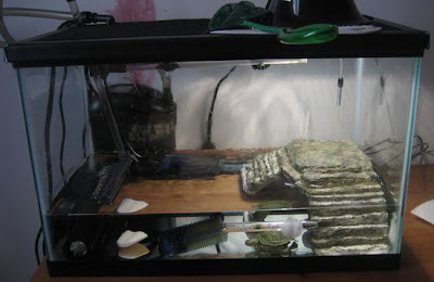 pet turtle tank - 5 gallon
