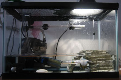 pet turtle tank setup