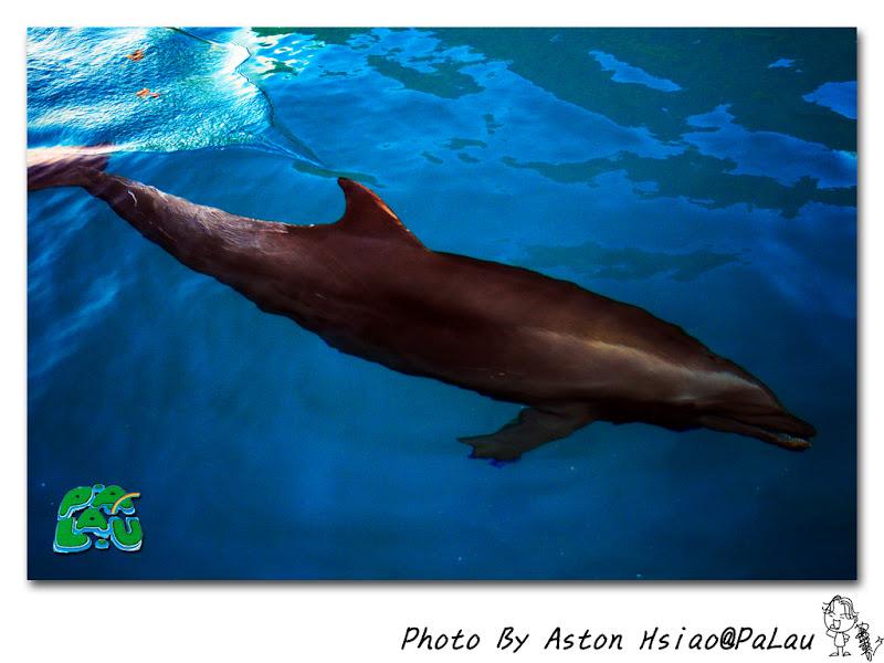 前往彩虹的故鄉-帛琉(Palau)4-<海豚灣> @ 飛碟的生活攝記 :: 痞客邦