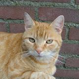 katten - DSCF2672.JPG
